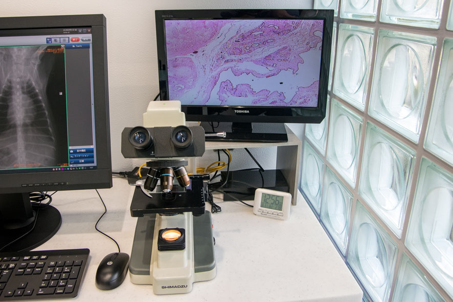 山之上動物病院の設備紹介:モニター付き顕微鏡