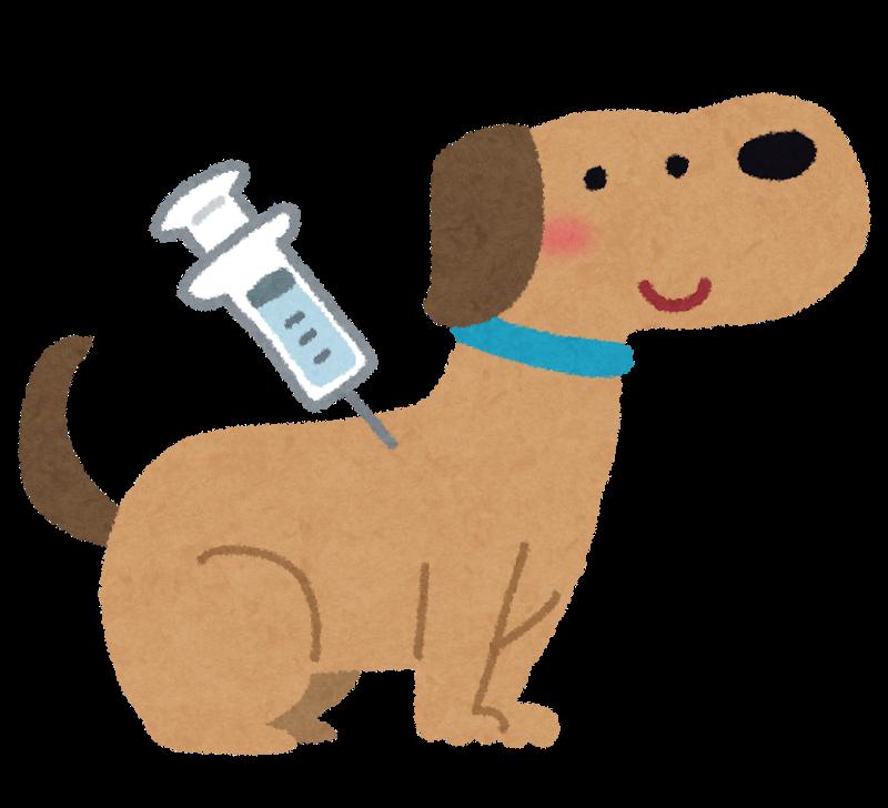 犬には年に一度は予防ワクチンを