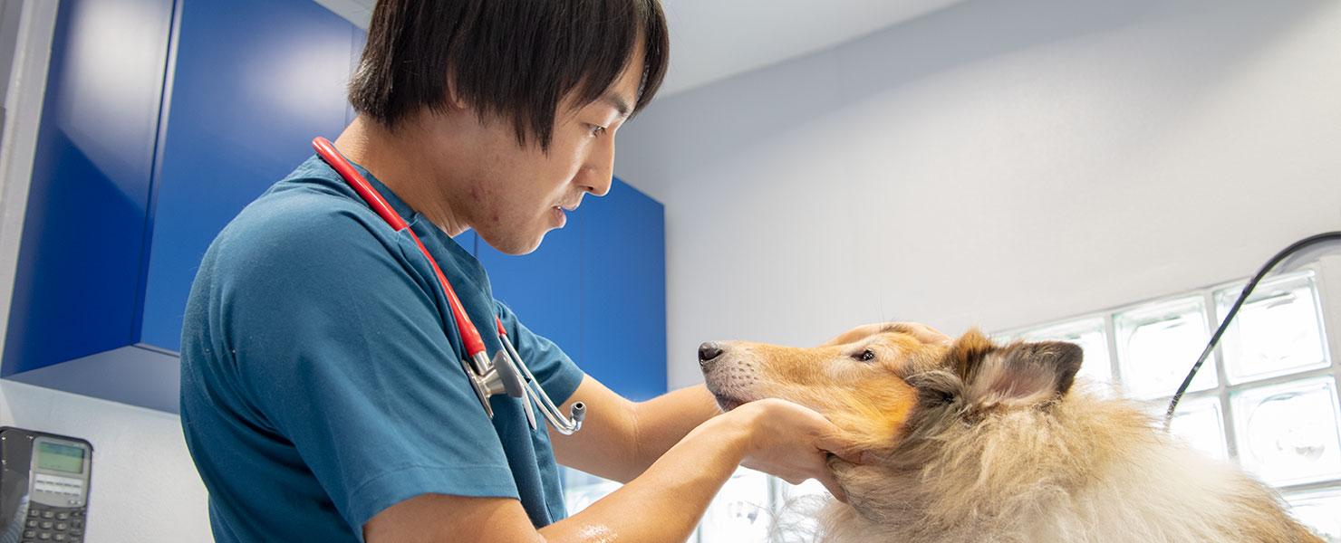 枚方の動物病院「山之上動物病院」診療・治療のご案内